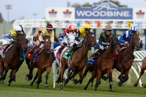 Horse Racing at Woodbine Racetrack
